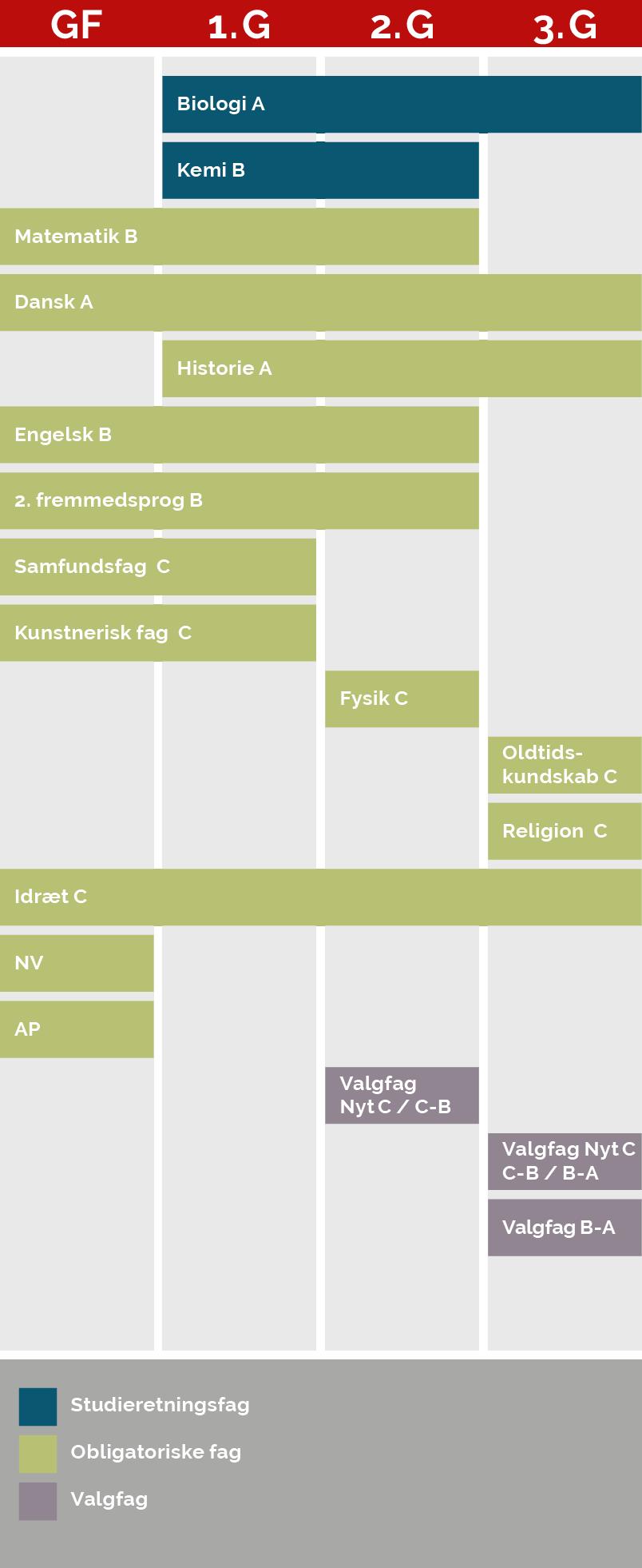 En grafisk model der viser, hvornår du har hvilke fag på denne studieretning. Af modellen fremgår følgende:  Biologi på A-niveau, som er et studieretningsfag, har du både i  1g., 2.g og 3.g. Kemi på B-niveau, som er et studieretningsfag, har du i 1.g og 2.g. Matematik på B-niveau, som er et obligatorisk fag, har du i grundforløb, 1.g og 2.g Dansk på A-niveau, som er et obligatorisk fag, har du både i grundforløb, 1.g, 2.g og 3.g. Historie på A-niveau, som er et obligatorisk fag, har du i 1.g, 2.g og 3.g. Engelsk og 2.  fremmedsprog på B-niveau, som begge er obligatoriske fag, har du i grundforløb, 1.g og 2.g Samfundsfag og kunstnerisk fag på C-niveau, som begge er obligatoriske fag, har du i grundforløb og 1.g Fysik på C-niveau, som er et obligatorisk fag, har du kun i 2.g. Oldtidskundskab og religion på C-niveau, som er obligatoriske fag, har du i 3.g Idræt på C-niveau, som er et obligatorisk fag, har du i grundforløb, 1.g, 2.g og 3.g. NV og AP, som er obligatoriske fag, har du kun i grundforløb. I 2.g har du et valgfag, som enten er et nyt C-niveau-fag eller et fag du hæver fra C-niveau til B-niveau. Derudover har du i 3.g to valgfag, som kan være et nyt valgfag på C-niveau, et C-niveau-fag, du hæver til B-niveau eller et valgfag, du hæver fra B-niveau til A-niveau.